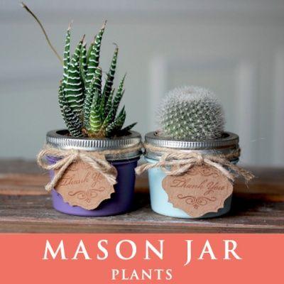 画像1: メイソンジャー 多肉植物 サボテン Ball Mason jar メイソンジャー レギュラーマウス 4oz メイソンジャープランツ 植物 ギフト
