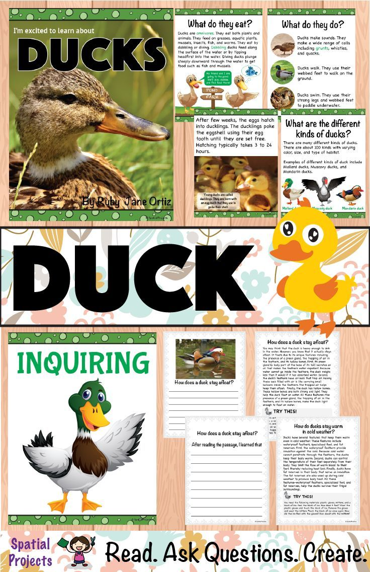 All About Ducks Nonfiction Unit Life Cycles Preschool Expository Writing Literacy Center Activity