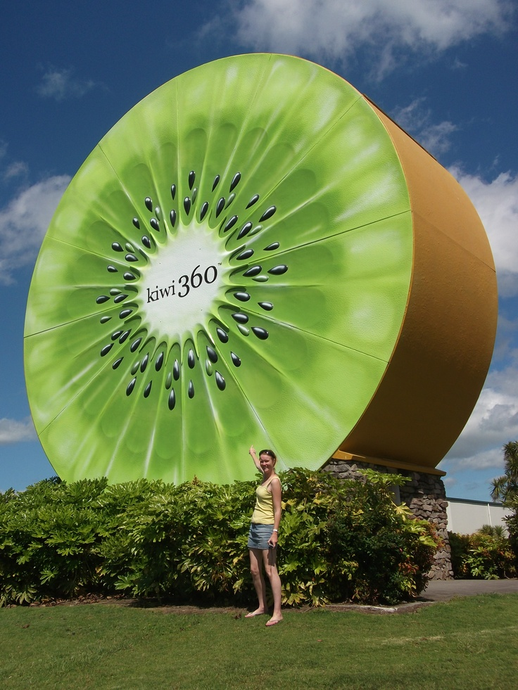 Giant Kiwi Fruit, Te Puke, NZ