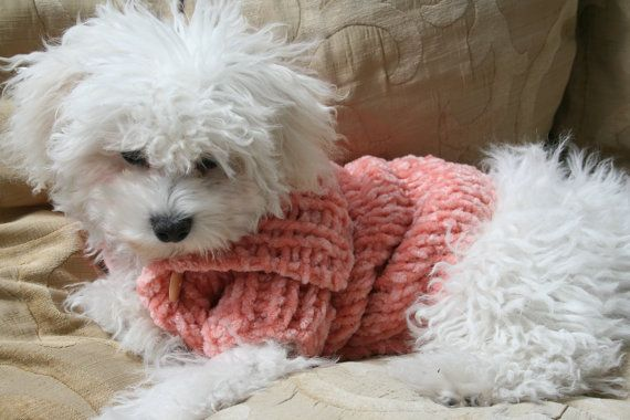 Dog Clothes  Dog Outfit  XXS Dog Clothes  Dog Sweater  by BubaDog