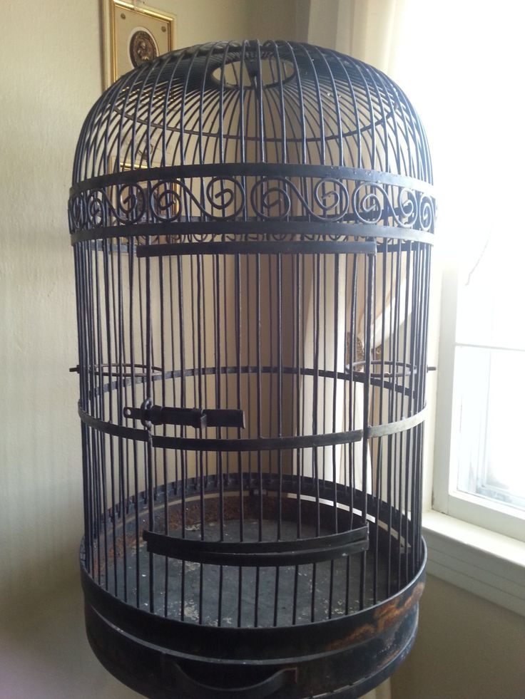 Large decorative bird cages for sale bird cages for Cage d oiseau decorative