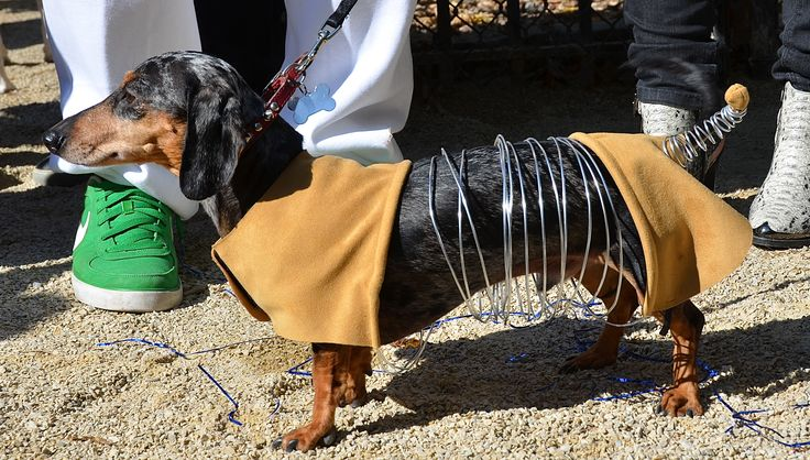 Slink from Toy Story. Dax's next costume.