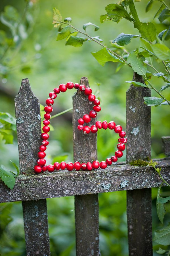 Red Berry Heart