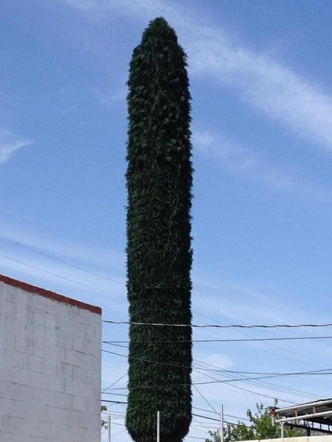 23 Best Images About Camouflage Cell Towers On Pinterest