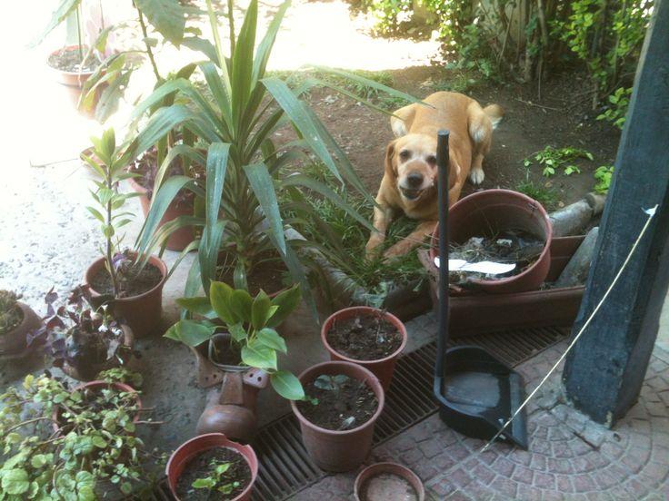 """En mi jardín""..."