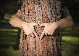 Billige terrassebrædder fremstillet af træsorter fra bæredygtigt skovdrift.
