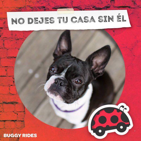 En #BuggyRides puedes viajar con tu mejor amigo con todas las comodidades que necesitan. ¡Descarga ahora nuestra app y compruébalo!   buggyrides.com