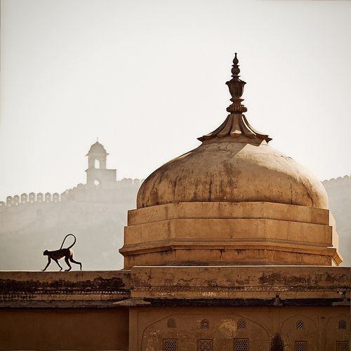 India (maybe with Abu on the rooftop?:) )
