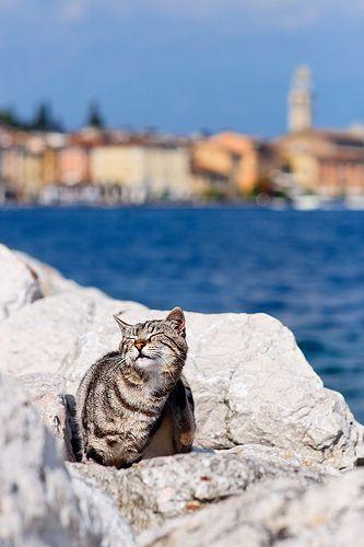 Enjoying the Sun in Salò   Flickr - Photo Sharing!