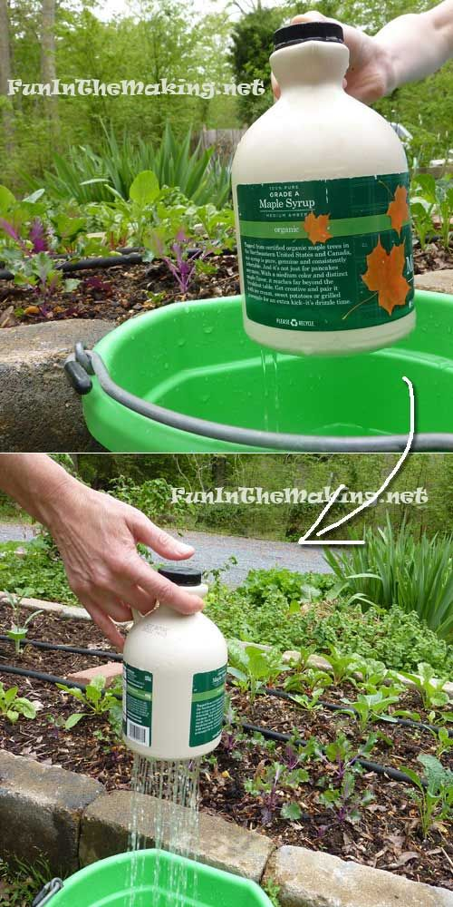 A thumb-controlled watering pot made from old maple syrup container will ease your gardening work.