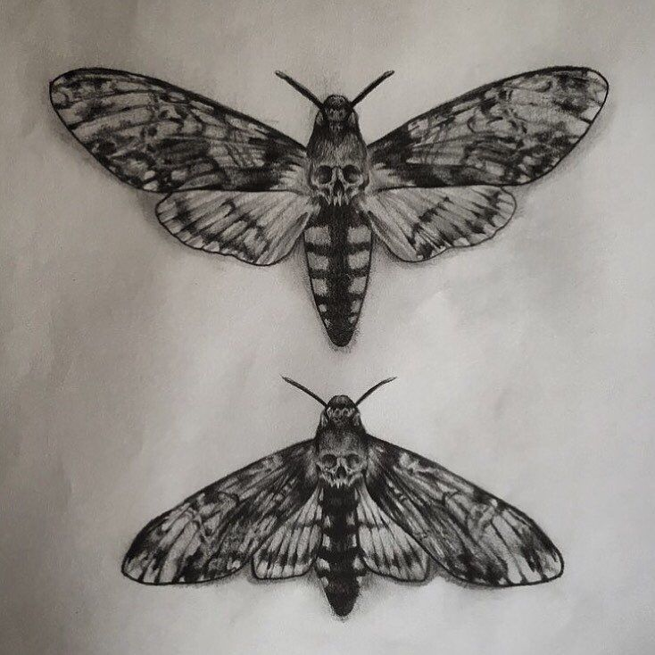 """82 Likes, 2 Comments – Bryn William Holman (@hillbillyholman) on Instagram: """"Would love to tattoo the top death moth, the one underneath has already…"""