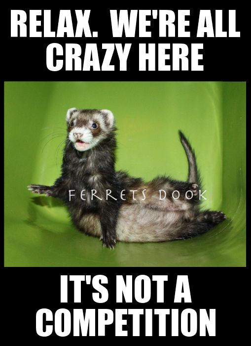 pin ferret meme on - photo #23