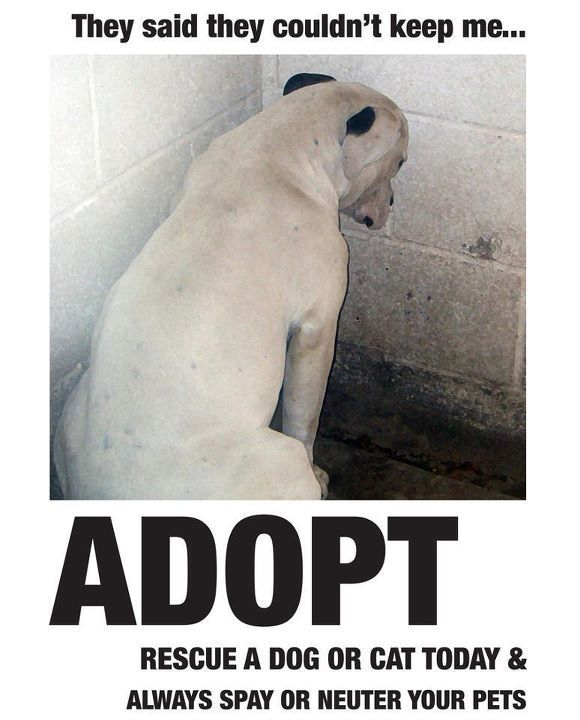 adopt: Animal Rescue, Friends, Shops, Pet, Animal Welfare, Animal Abusive, Puppys, Dogs Cats, Shelters Dogs