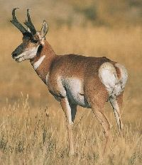 buck and doe planning guide