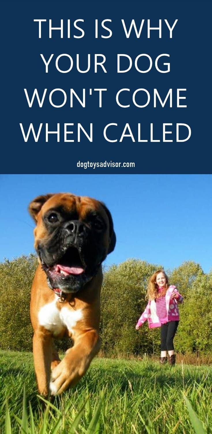 Does Your Dog Come Every Time When Called Training Your Dog To