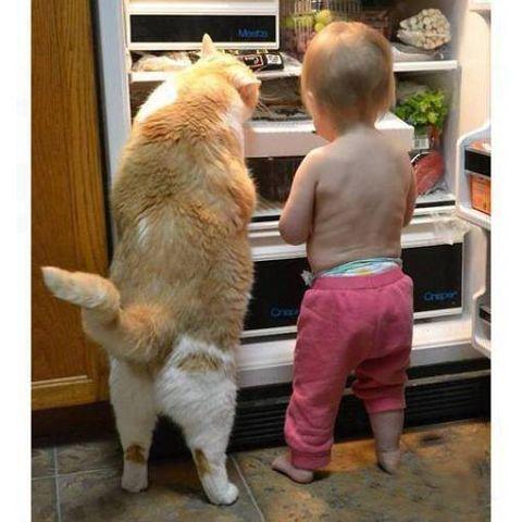 tu prends de la glace et moi du poisson !