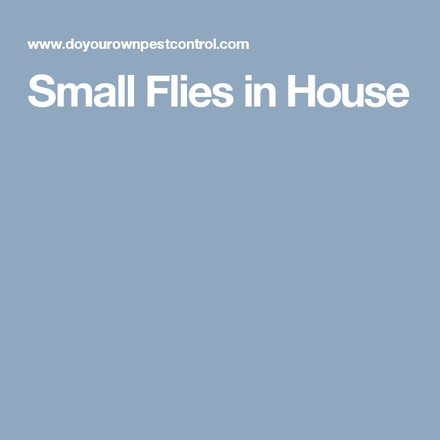 Small Flies in House