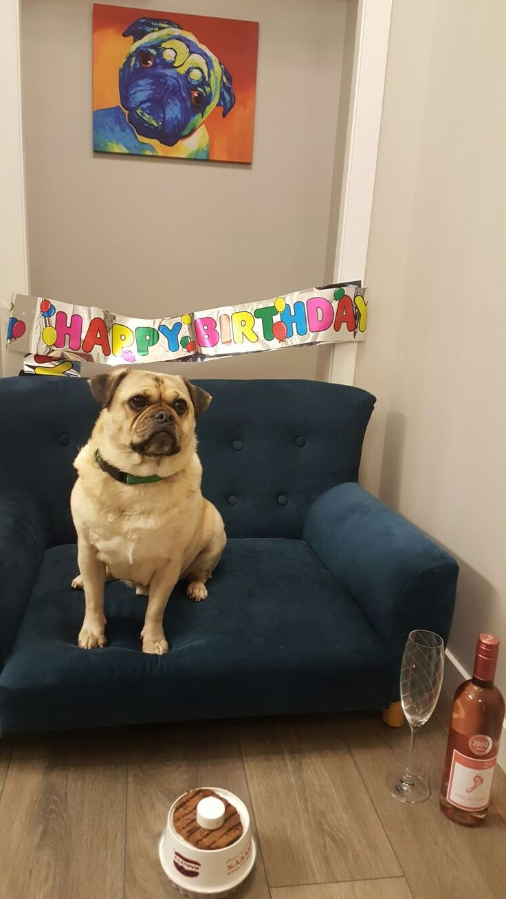 Dog birthday jug