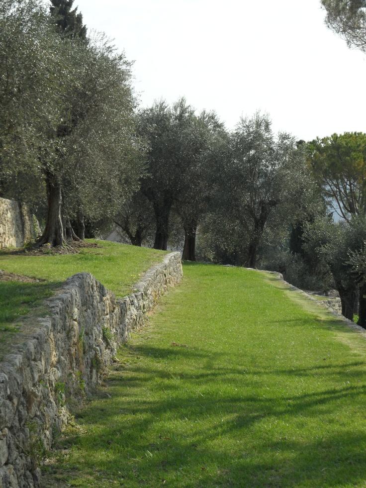 jardins en restanques plantés d'oliviers multi-centenaires à Cannes