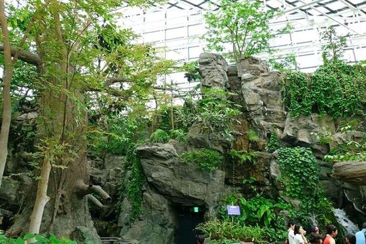 Kaiyukan in Osaka