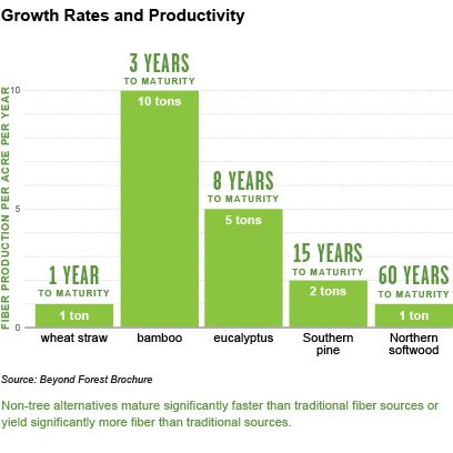 Bamboo growth rates