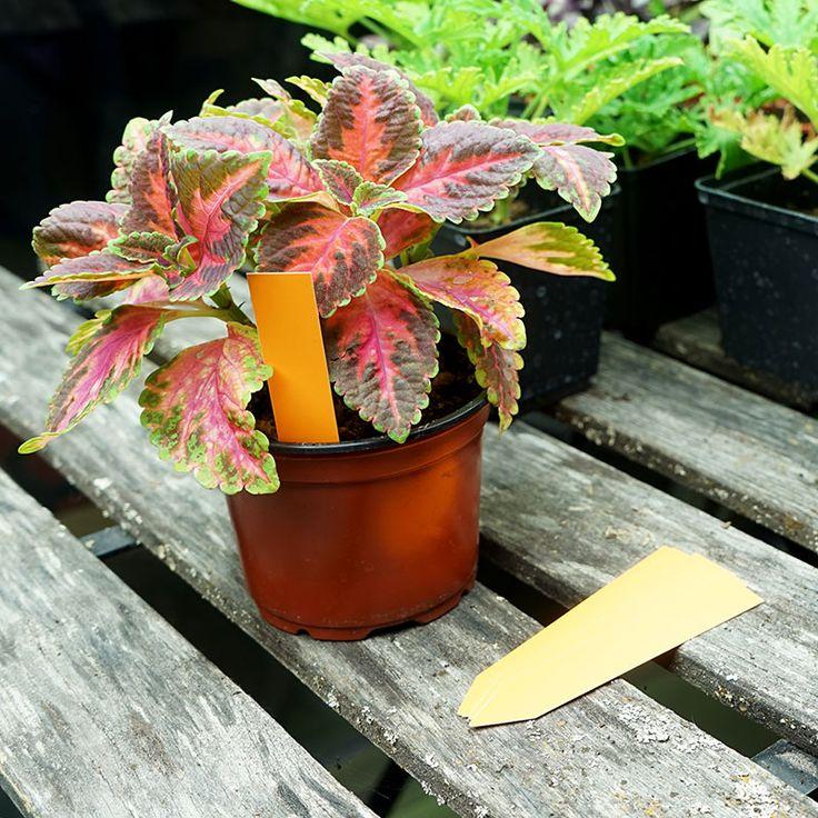Plantetiketter 20-pack, orange #Plantetiketter #Växtetiketter