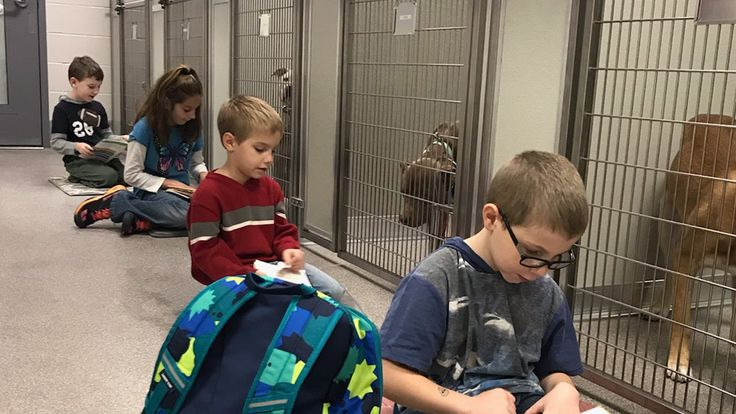 Reading to animals program at shelter has overwhelming
