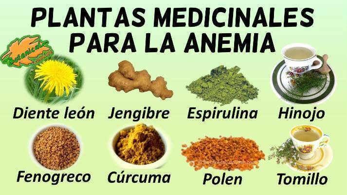 alimentos pregnancy restablecer anaemia canina