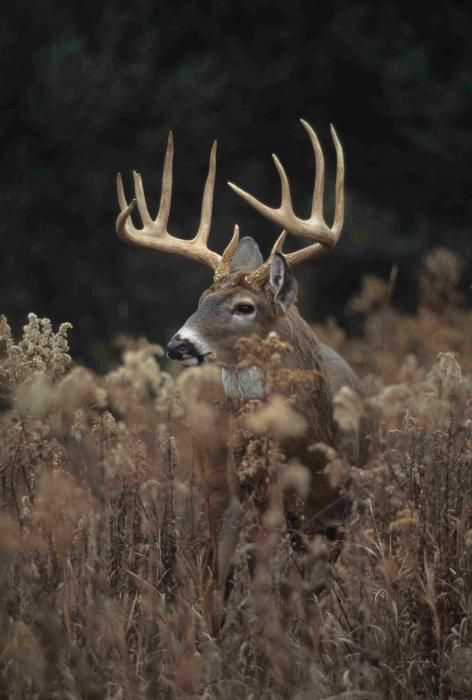 <p>( Editor's Note: This Retro Realtree photo gallery was originally published in October of 2013.) The process of getting a whitetail from the button buck stage to the Boone and Crockett category is a mystical journey that includes a complex assortment of variables. It takes four basic ingredients to produce...</p>