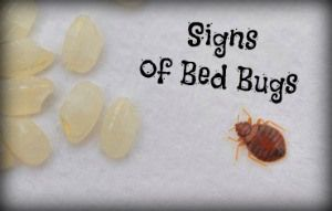 Are You Sleeping Alone? 4 Signs of Bed Bugs > Here's how to know if you have bed bugs, plus an easy treatment for itchy bed bug bites. The most common sign of bed bugs is bites on your body, which cause itchy welts and often appear in a zigzag pattern.