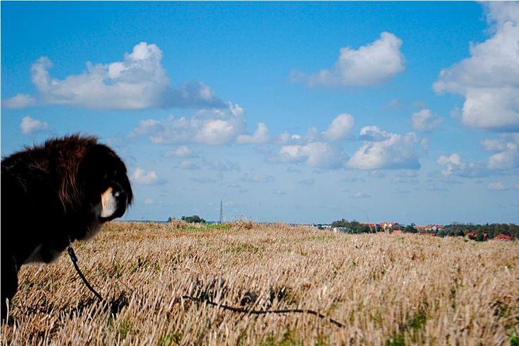 Kanda Nam Kha Tibetan Mastiff Kennel