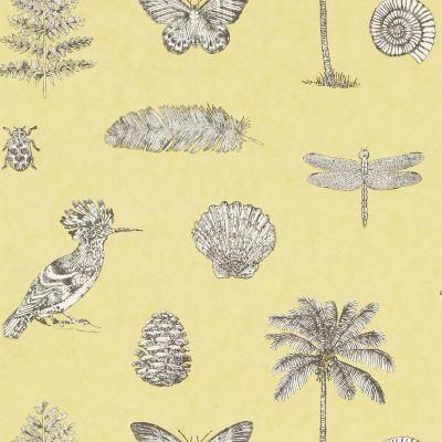 Cocos wallpaper by Sanderson