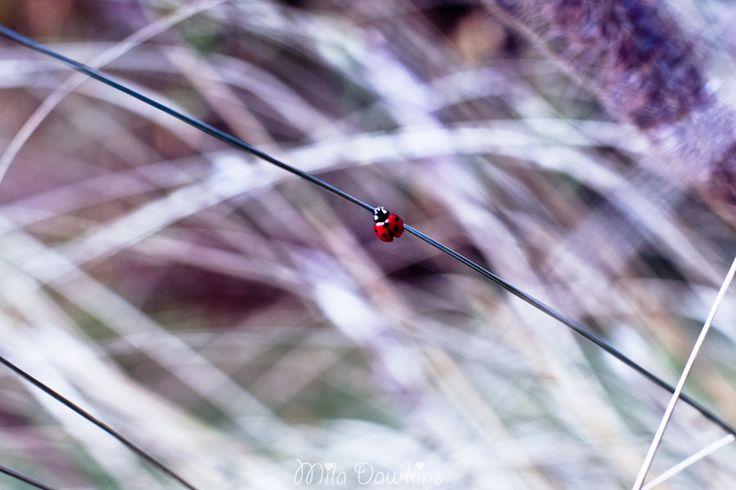 Dots & Stripes by Mila