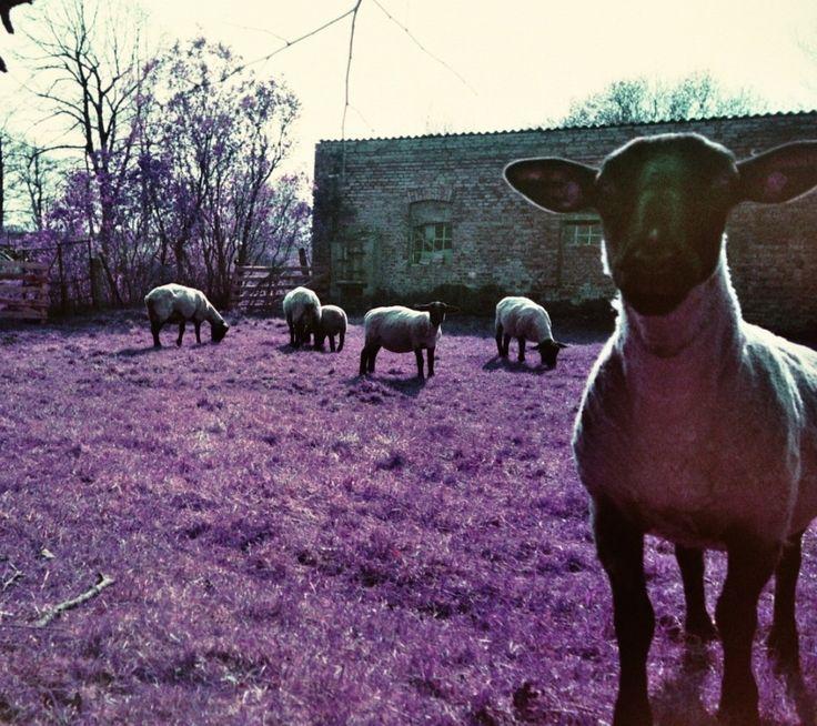 LomoChrome Purple (c) Lomoherz.de, lomo