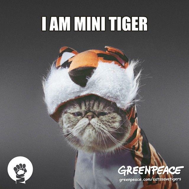 Hamilton Tiger Cat Game Today