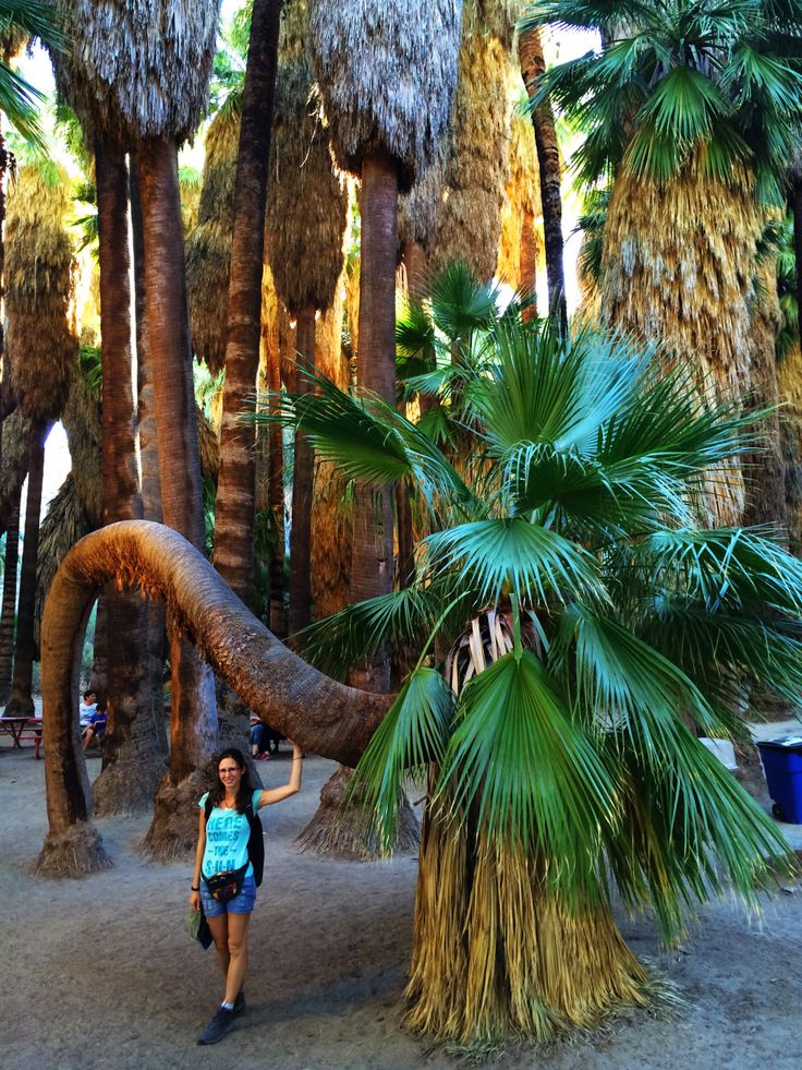 Indian Canyons, Palm Springs | Best Autumn Hikes In California