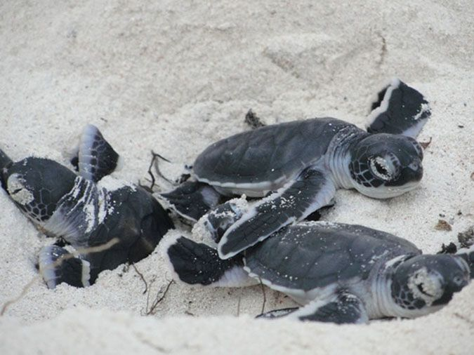 The plight of the turtles at Kenya's Watamu beach