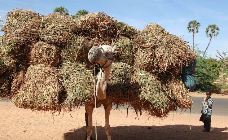 Desert Transport.  Niamey, Niger   © Ferdinand Reus