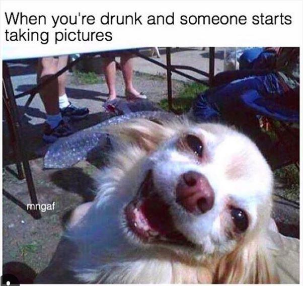 De 25 Bedste Id 233 Er Inden For Alcohol Memes P 229 Pinterest