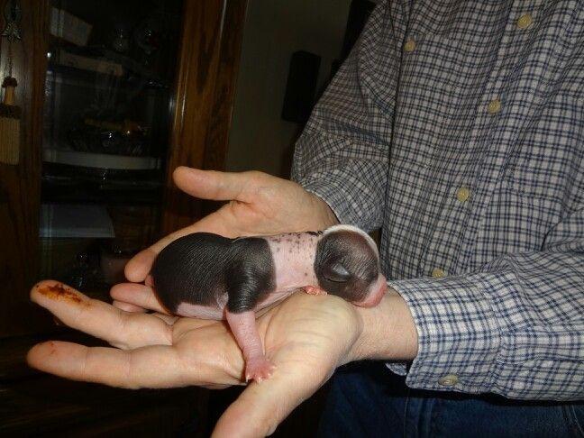 Pegasus just born