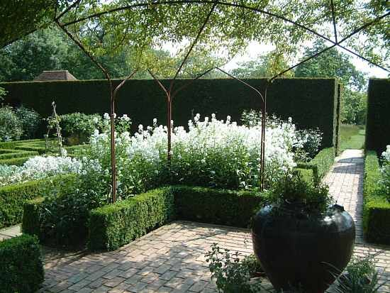boxwood border and as a container
