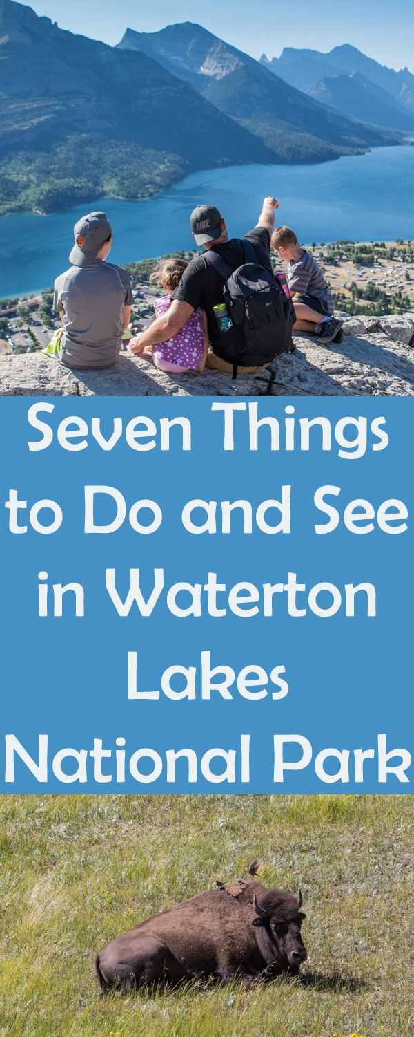 What to do at Waterton Lakes National Park, camping at Waterton with kids, wildlife at waterton lakes national park.