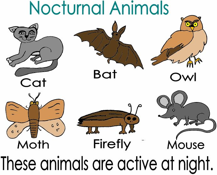 34 best images about Nocturnal Theme on Pinterest | Night, Bats ...