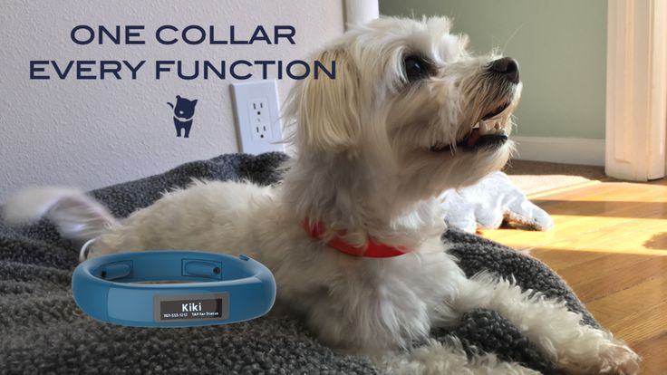 Scollar Mini - Expandable smart collar for small dogs & cats