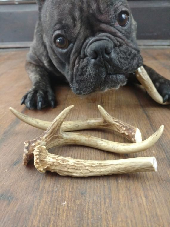 Deer Antler Dog Chews Natural Toys For Dogs Small Medium And