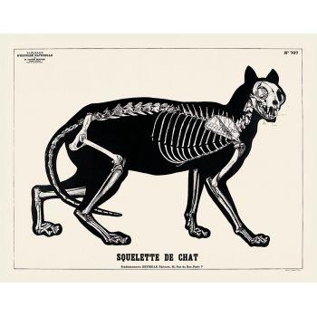 Le squelette du Chat