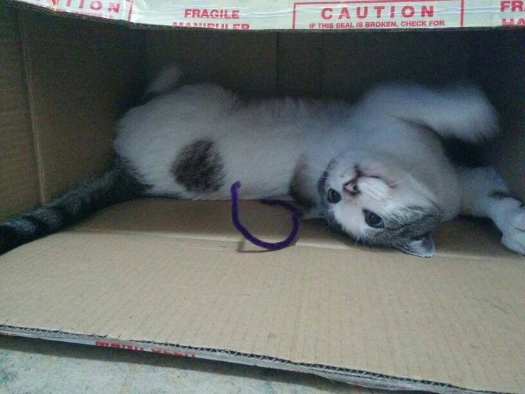 Pete loves a good box