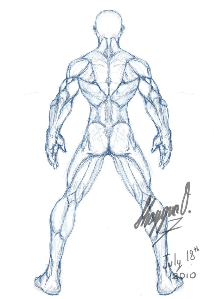 male drawing template | Male Anatomy Template: Back by ~Shintenzu on deviantART