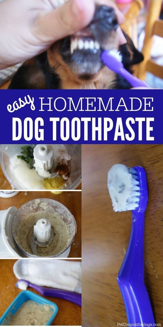 How to make homemade dog toothpaste. This is such a simple recipe that will get …