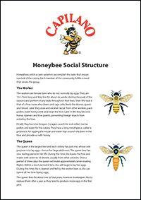 Honeybee Social Structure #bees #beekeeping #honey #facts
